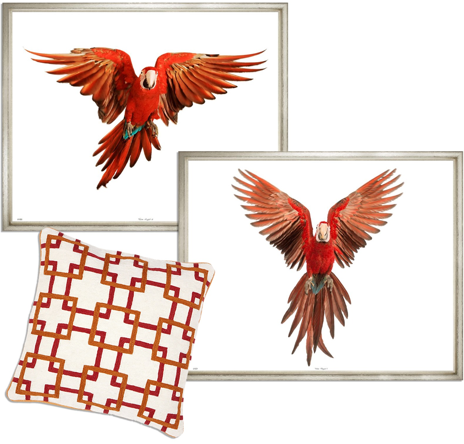 Parrot photography wall art and red orange white printed pillow - Original Interiors